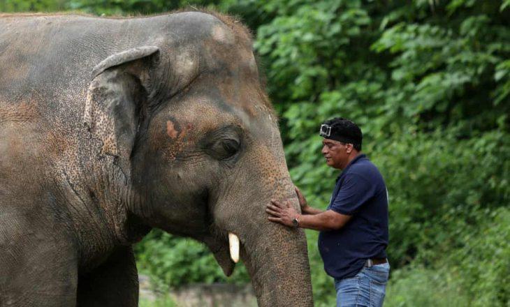 """""""Elefanti më i vetmuar në botë"""" i lirë nga kopshti zoologjik për një jetë më të mirë"""