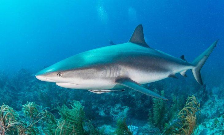 Gjysmë milioni peshkaqenë mund të vriten për vaksinën, thonë ekspertët