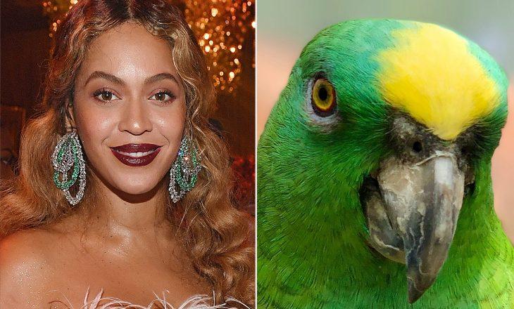 Ky papagall bën një interpretim të mrekullueshëm të këngës së Beyonce