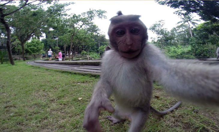 Majmuni vodhi telefonin e një burri, bën 'selfie' shumë qesharake