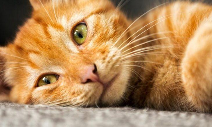 Macet ngjyrë portokalli janë shumë të veçanta