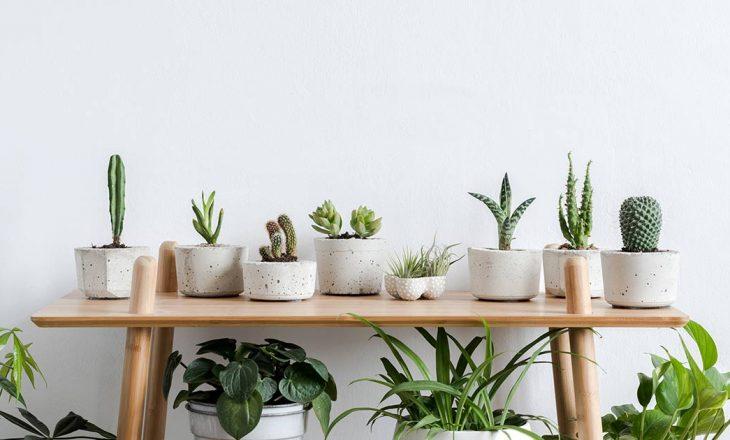Bimët shtëpiake që rrisin disponimin dhe përmisojnë shëndetin tuaj