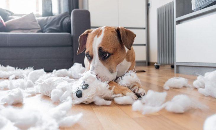 Të gjitha mënyrat se si ju po stresoni qenin tuaj