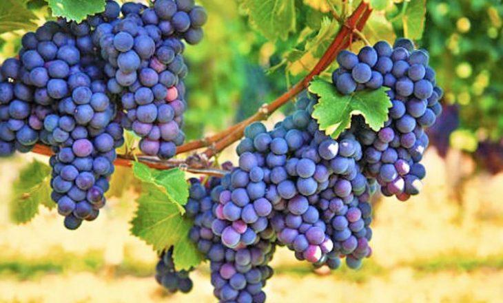 Rrushi me erë është fruti që nuk duhet të mungojë në rutinën tuaj ditore gjatë stinës së vjeshtës