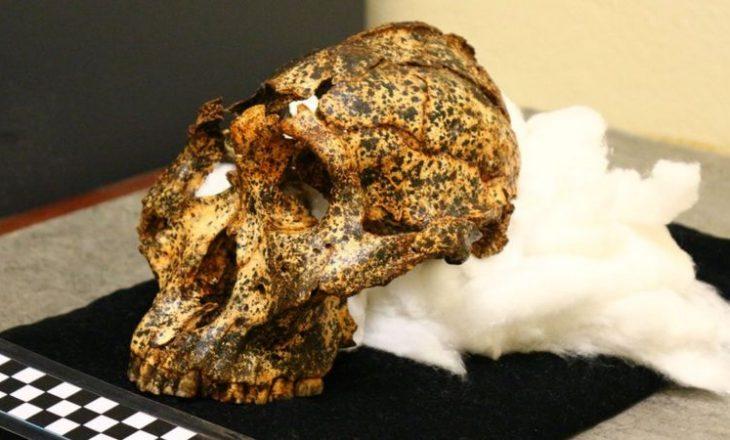 Gjindet një kafkë 2 milionë vjet e vjetër që i takonte species kushëri të njeriut