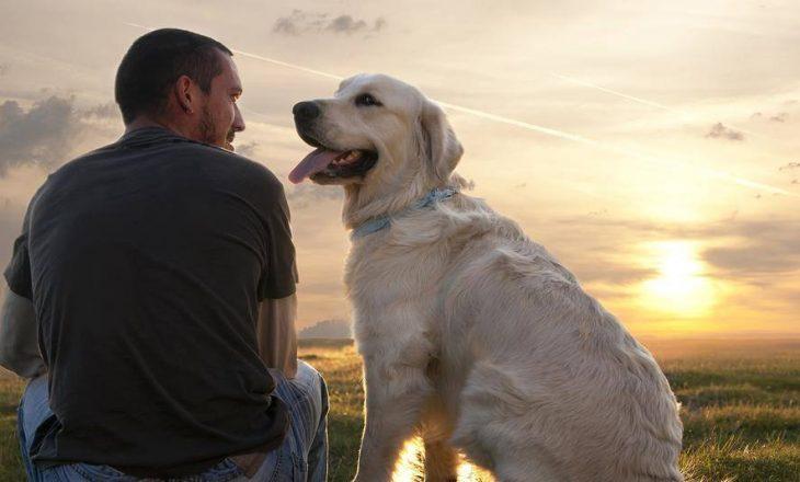 Për të kuptuar qentë, duhet të kuptojmë gjuhën e tyre të trupit