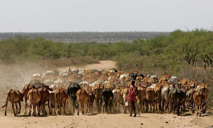 Çad: Tetë persona humbin jetën nga përleshjet mes barinjve dhe fermerëve