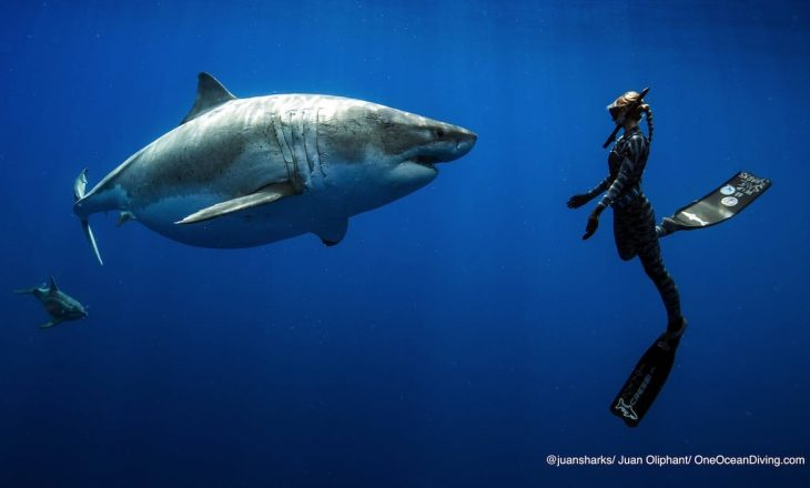 Nga sulmi i një peshkaqeni, një turiste humb jetën