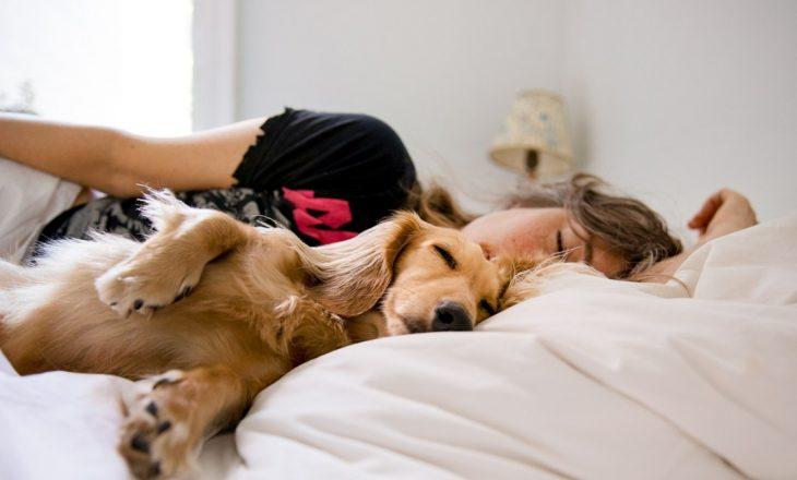 Fjetja me qenin tuaj në shtrat është e shëndetshme për ju