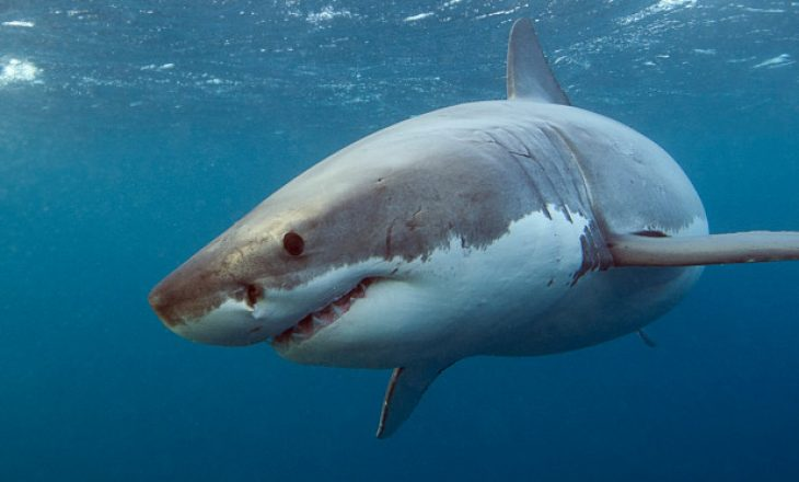 Surfisti ecën për të kërkuar ndihmë pas sulmit katastrofik të peshkaqenit