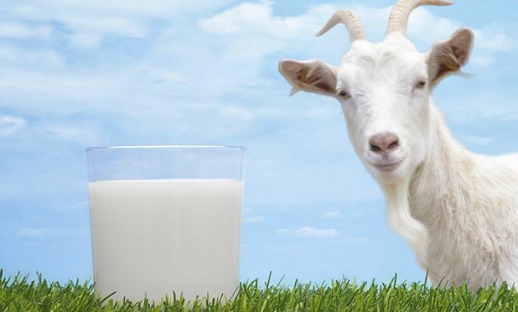 Arsyet pse qumështi i dhisë është përbërësi sekret për të cilin lëkura juaj ka nevojë