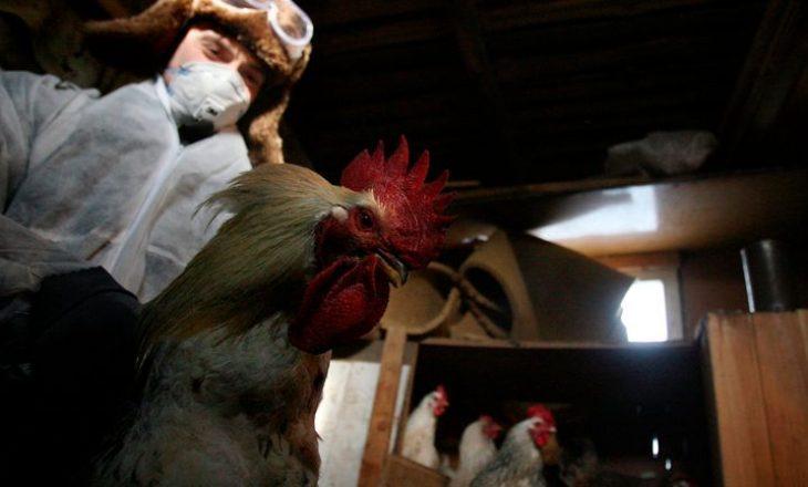 Rusia raporton rastin e parë të infeksionit njerëzor me gripin e shpendëve H5N8