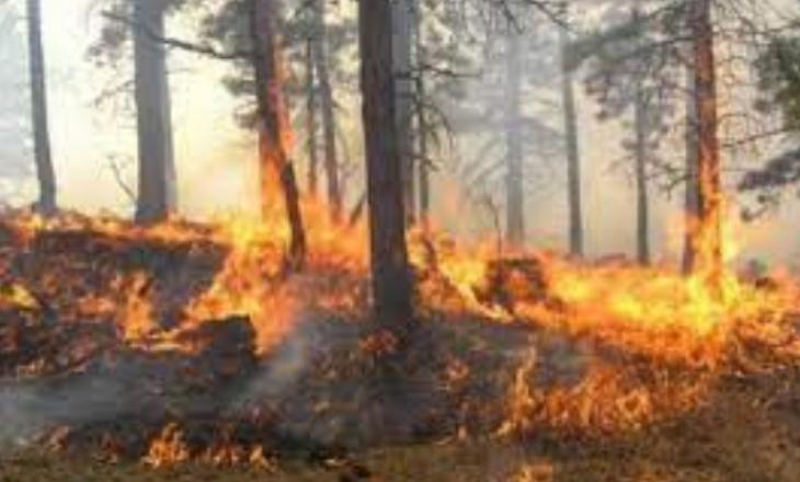 Një mal në Malishevë përfshihet nga zjarri