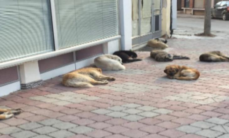Regjistrimi i qenve me pronarë – zgjidhje për të ndaluar shumimin e qenve endacakë
