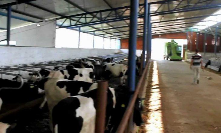 Përfshihet nga zjarri stalla e lopëve në Prizren, digjen 11 krerë lopë