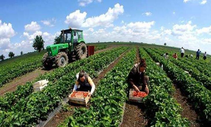Qeveria ndan mbi një milion euro për kompensimin e dëmeve në bujqësi