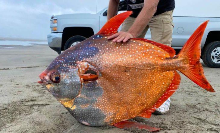 Peshk i rrallë ngjyra-ngjyra zbulohet në një plazh në Oregon