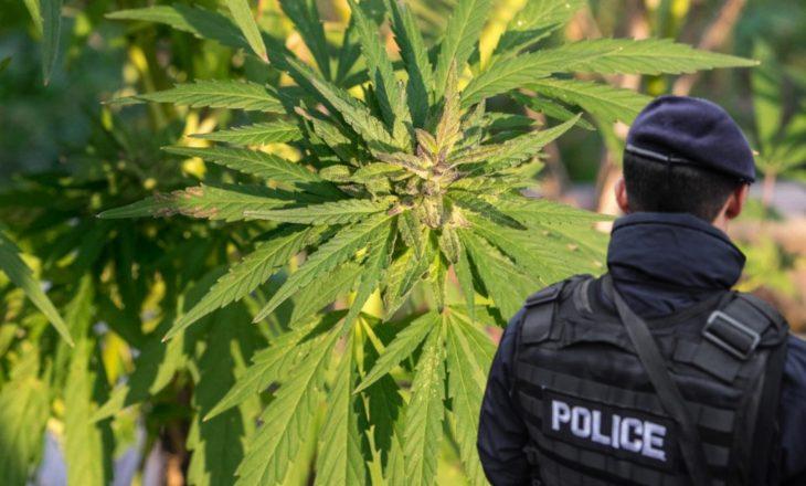 Rahovec: Arrestohet e më pas lirohet i dyshuari që po kultivonte drogë