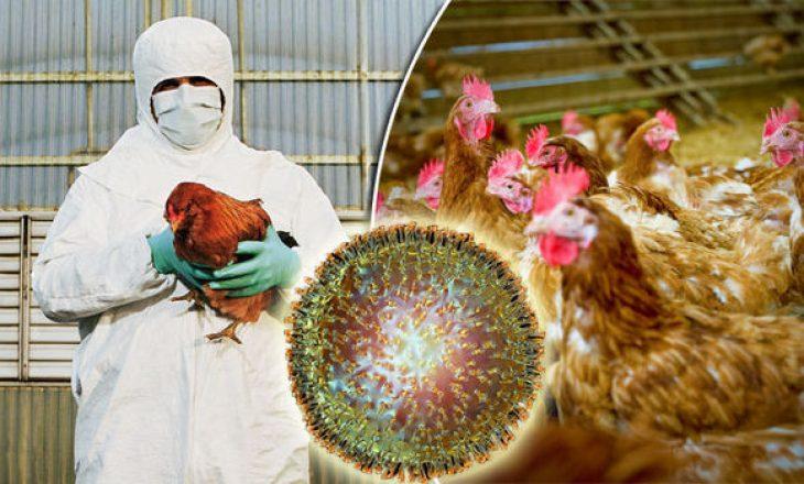 """Shfaqet një rast i gripit të shpezëve """"Avian Influnza""""në Podujevë"""