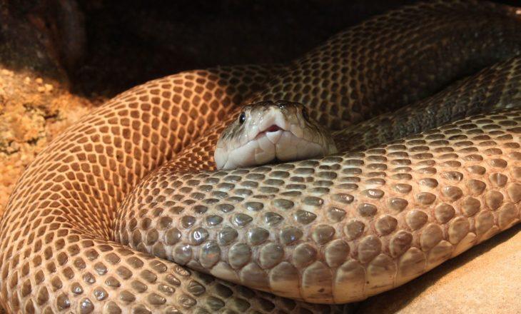 Dënohet me burgim të përjetshëm pasi vrau gruan e tij duke i lëshuar gjarprin Kobra